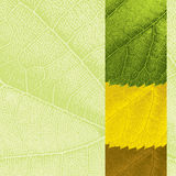 Template with leaf texture Stock Image