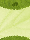 Template with leaf texture Stock Photo