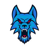 Template of logo with angry wolf head. Emblem for sport team. Ma Royalty Free Stock Photo
