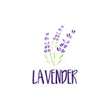 Template logo design of abstract icon lavender. Vector illustration Stock Images