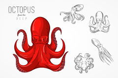 Template for logos, labels and emblems with outline silhouette octopus. Vector illustration. Stock Images