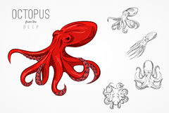 Template for logos, labels and emblems with outline silhouette octopus. Vector illustration. royalty free illustration
