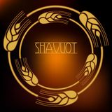 Decorative grain ears to create design compositions. The Jewish holiday of Shavuot. Symbols of the harvest and. Template in a minimalist style to create labels stock illustration