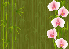Template with orchids end bamboo Stock Image