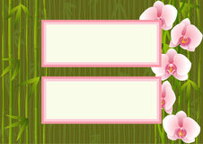Template with orchids end bamboo Royalty Free Stock Images