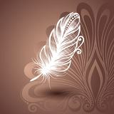 Template with Peerless Feather in Ornate Background Stock Photo