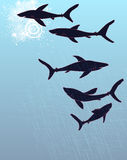Template poster design with hand-drawn sharks silh Royalty Free Stock Photography