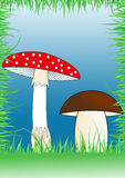 Template for poster with mushrooms Royalty Free Stock Photo