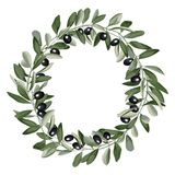 Template Round Frame from Olive Branches. Floral round template with olive branch with leaves and black fruit in watercolor stylization on white background Royalty Free Stock Photo