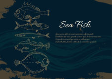 Template with set of sea fish. Perch, cod, mackerel, flounder, saira. Vector doodle. Template with set of sea fish on a black background. Place for text. Perch Royalty Free Stock Photo