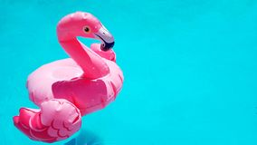 Template for summer sales. Inflatable pink flamingo swims in clear blue azure pool water. There is a place for text. Copy space, isolated. Beautiful toy side stock photos