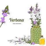 Template verbena 2 royalty free illustration