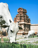 Temple in ancient town Hampi, India Stock Image
