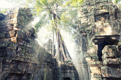 Temple in Angkor Thom, Cambodia Stock Photography