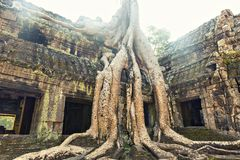 Temple in Angkor Thom, Cambodia Stock Image