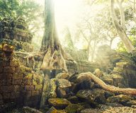 Temple in Angkor Thom, Cambodia Royalty Free Stock Photo