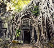 Temple in Angkor Thom Royalty Free Stock Images