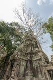 Temple antique de Prohm de ventres, Angkor Thom, Siem Reap, Cambodge Photographie stock libre de droits