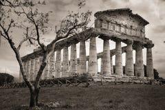 Temple of Athena. Paestum. Salerno. Campania. Italy. The greek Temple of Athena or Minerva. Paestum. Salerno. Campania. Italy royalty free stock images