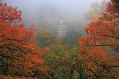 Temple avec l'érable Images stock
