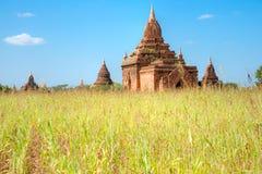 Temple in Bagan, Myanmar. Royalty Free Stock Photo