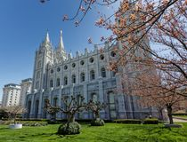 The Temple Through the Blossoms. LDS Salt Lake City temple in spring Stock Photos
