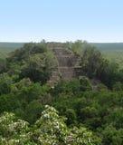 Temple at Calakmul Stock Photo