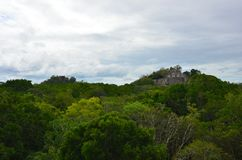 Temple at Calakmul, Campeche, Mexico. The temple at Calakmul surrounded by tropical trees.  Calakmul is an ancient Mayan ruins found in the jungles of the Peten royalty free stock photo