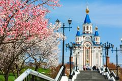 Temple church architecture sakura cherry flowers cherry bush on a background of a temple city cityscape Khabarovsk cherry b. Cherry bush on a background of a Stock Photos