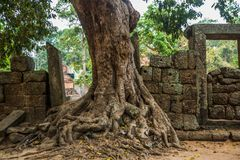 The temple complex of Angkor.Trees with roots.Cambodia. Royalty Free Stock Image