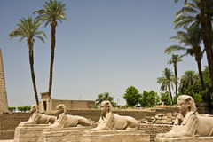 Temple de Luxor Image stock