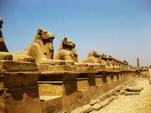 Temple de Luxor - groupe Photos stock