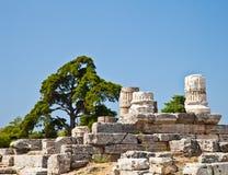 Temple de Paestum - Italie Image libre de droits