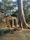 Temple de Prohm de ventres d'Angkor Vat au Cambodge images libres de droits