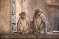Temple de singe photo stock