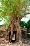 Temple de som de Ta, Angkor, Cambodge Photos libres de droits