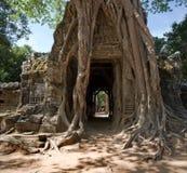 Temple de som de Ta, Angkor, Cambodge Image libre de droits