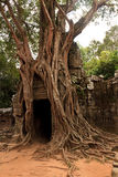 Temple de som de Ta, Angkor, Cambodge Images libres de droits