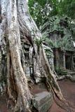 Temple de Ta Prohm Image stock