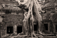 Temple de Ta Prohm Image stock