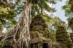 Temple de Ta Prohm Photo stock