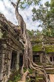 Temple de Ta Prohm photographie stock