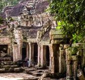 Temple de Ta Prohm Photographie stock