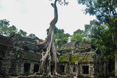 Temple de Ta Prohm Photographie stock libre de droits