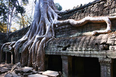 Temple de Ta Prohm, Angkor Images stock