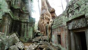 Temple de Ta Prohm, Angkor, Cambodge Photo stock