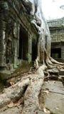 Temple de Ta Prohm, Angkor, Cambodge Photos stock