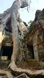 Temple de Ta Prohm, Cambodge Images libres de droits