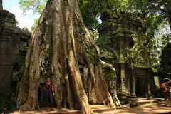 Temple de Ta Prohm, Cambodge Photographie stock