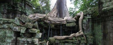 Temple de Ta Prohm, Cambodge Photographie stock libre de droits